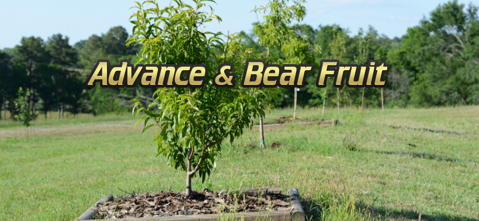 Advance and Bear Fruit - Baby Fruit Trees