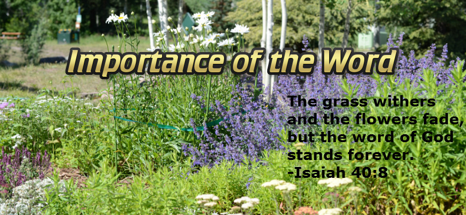 Importance of the Word - Mountain Flowers