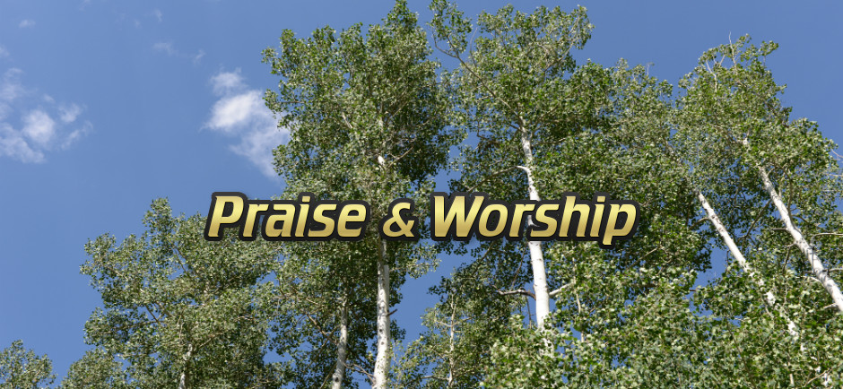 Praise and Worship - White Trees in Summer Sky
